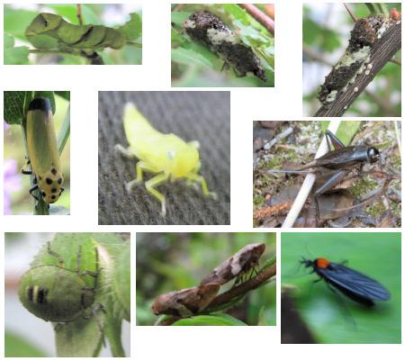 庭で見かけた昆虫たち