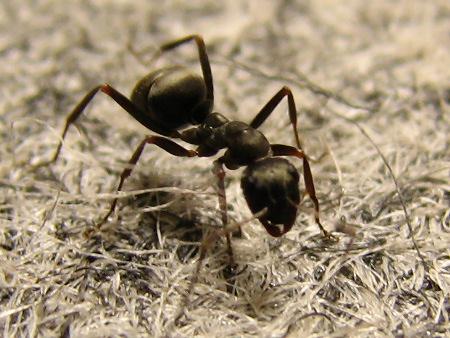 写真館-冬眠からさめたアリ