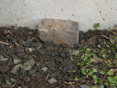 オオカマキリの埋葬