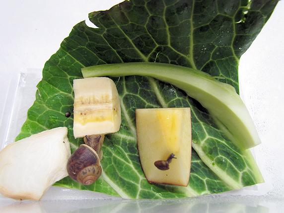リンゴとバナナのカタツムリ