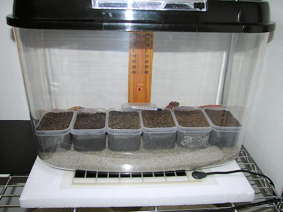 産卵床の暖房開始
