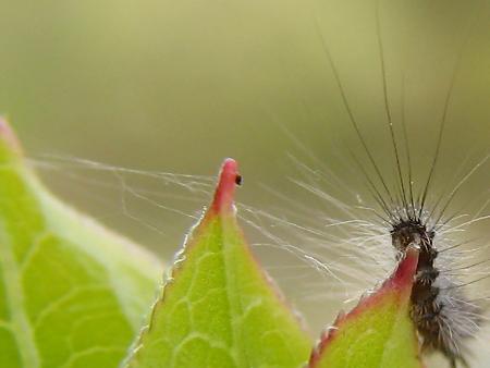 大発生中だった例の毛虫