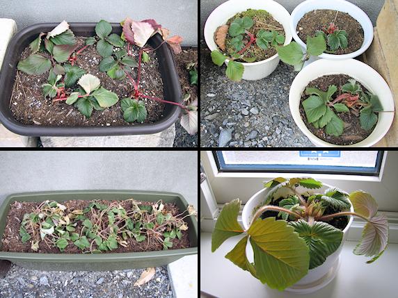 春を待つ植物たち