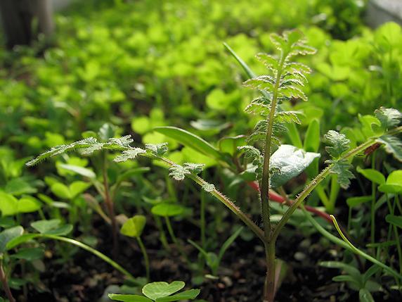 野原感覚の花壇育成中