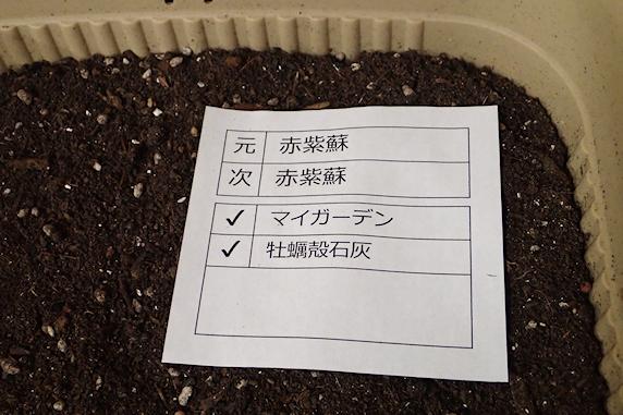 車庫に退避中の鉢植え