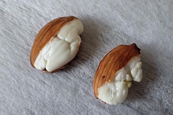 6度目の挑戦、桃の種蒔き