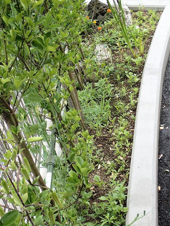 開花が始まる野原風花壇