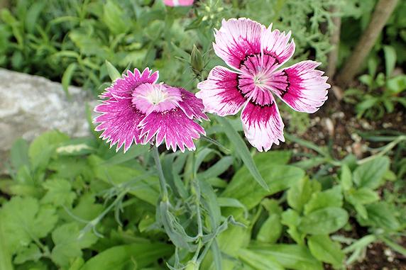新しい花が咲いた野原風花壇
