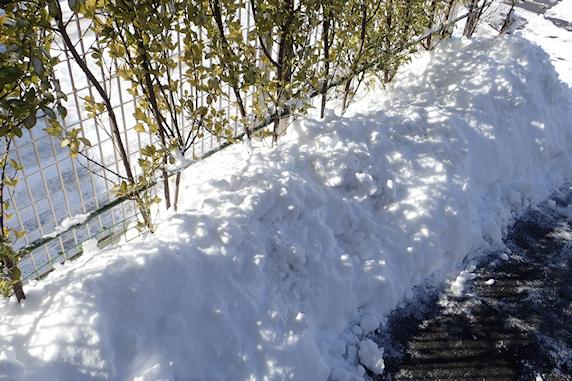 雪の下の野原風花壇