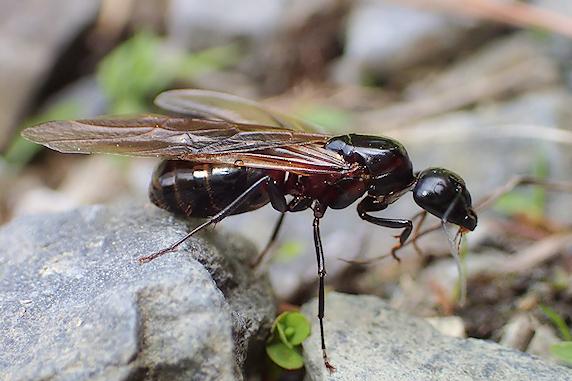アリの結婚飛行の季節