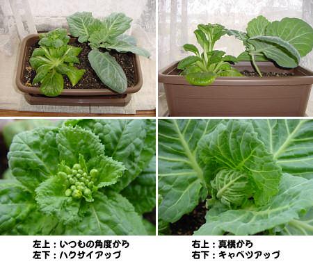 カタツムリ-060627