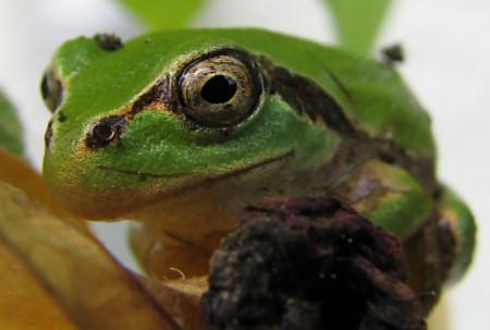 写真館-蚊の視線から見たカエル