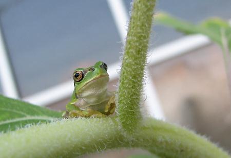 写真館-カエルのひとりごと