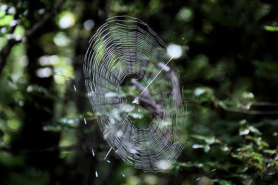 クモの巣とキノコ