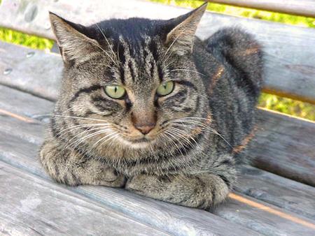水元公園の猫