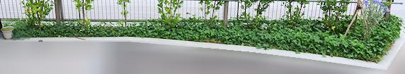 野原風花壇全景
