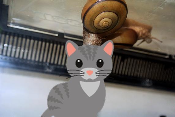 カタツムリの交尾を激写