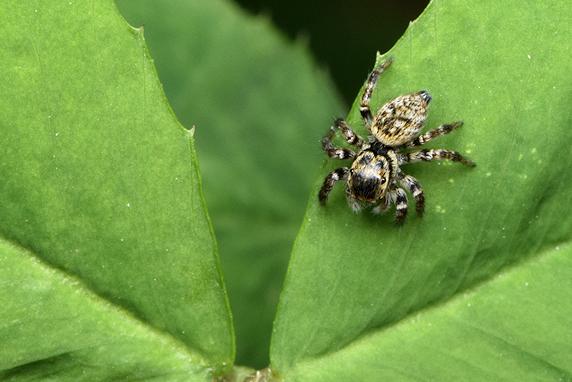 いろいろなクモ
