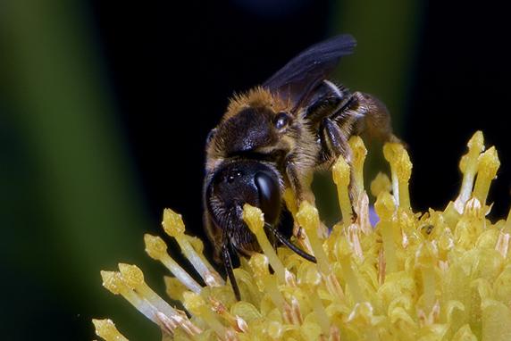 ハチの複眼が好き