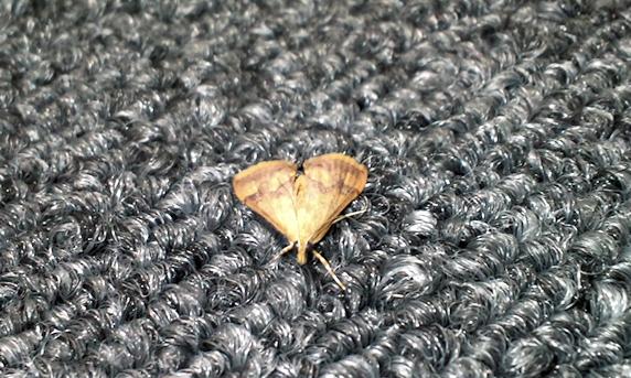 今年初の昆虫登場