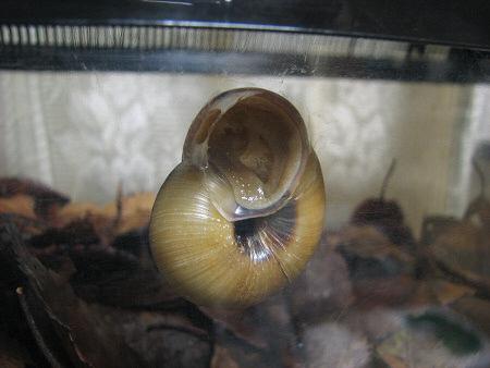 カタツムリの飼育ケースを冬眠バージョンに改造