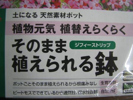 松-060409-04