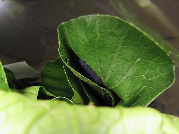 カタツムリにベビー食を追加