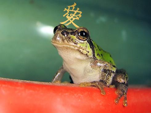 戦国のカエル