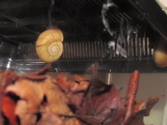 カタツムリの冬眠位置を再確認