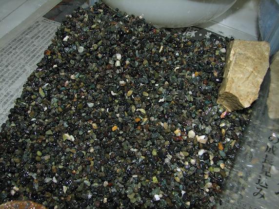 サワガニ水槽の掃除