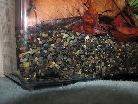 カタツムリ飼育ケースを冬眠モードに変更
