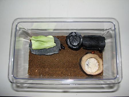 ゴミムシダマシの飼育環境整備