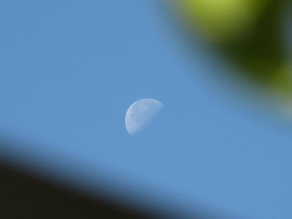 梅と月と佐藤錦