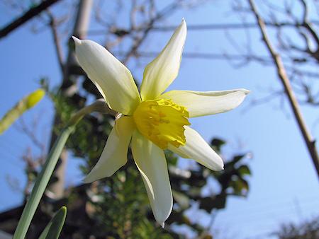 春の庭の花たち