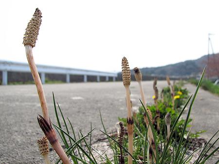 コンクリートの隙間の植物