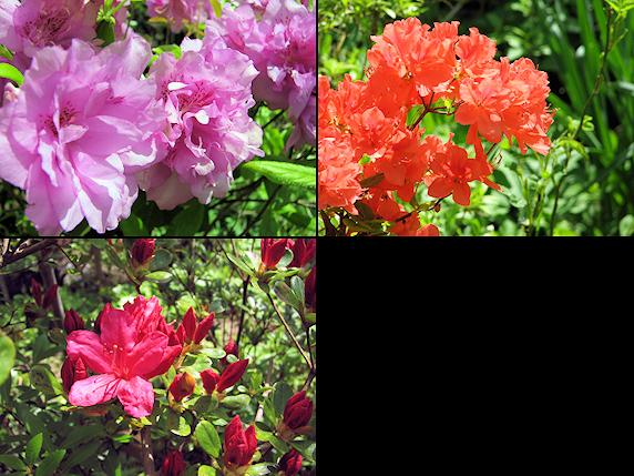 春の庭の花