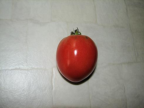 トマトの最後の収穫