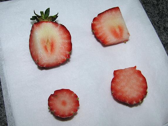 野生化イチゴをカタツムリに