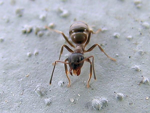 アリの名前をお伺いしたい次第
