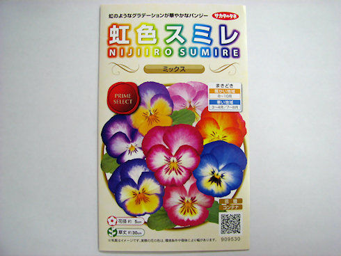 虹色スミレ開花