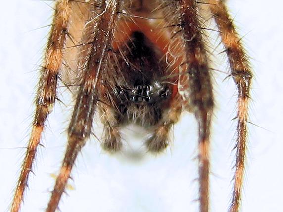 クモ、現る