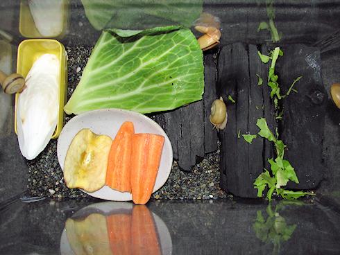 カタツムリの好物実験実施