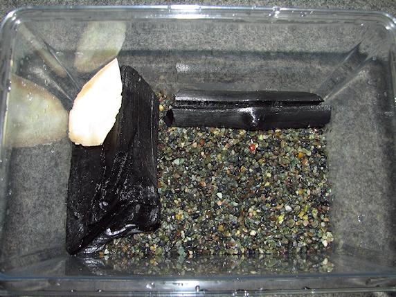 カタツムリの飼育ケースを一新