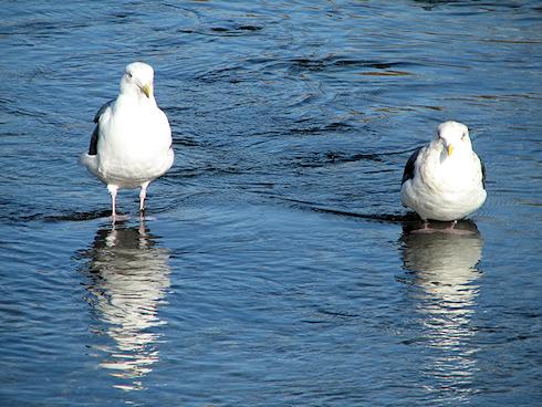 水鳥たちのお正月