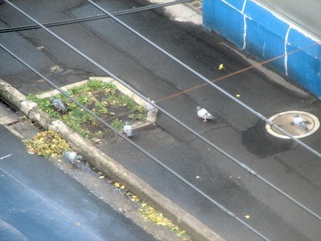 9階から見た朝のハト