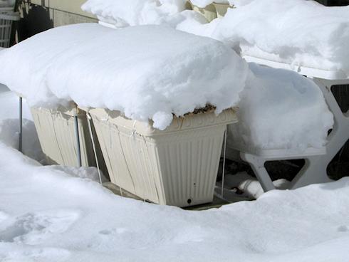 氷点下11.5℃の下のニンニク