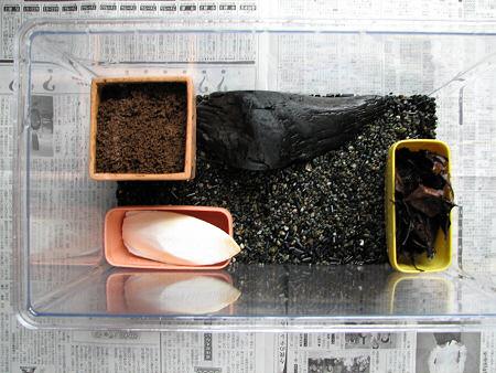 大掃除を喜ぶカタツムリ