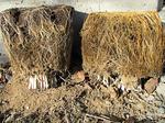 霜による土壌の細粒子化