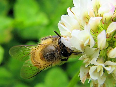 雑草が支える昆虫の生活