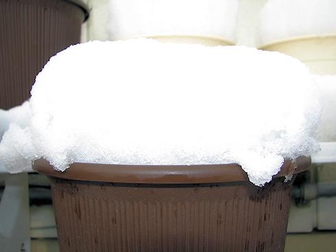 かき氷になった鉢
